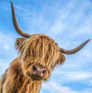 Private Guided Tours of Scotland f