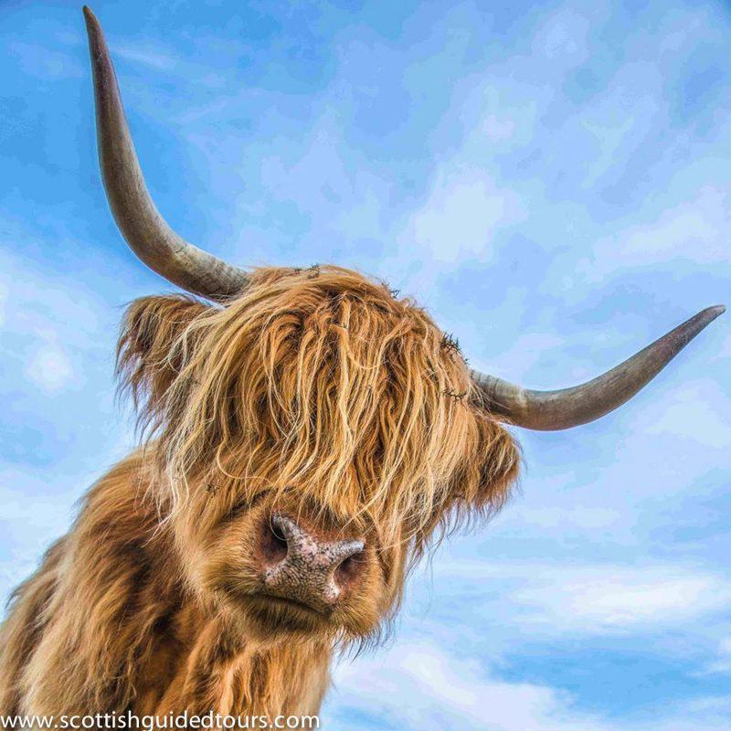 Glencoe from Edinburgh