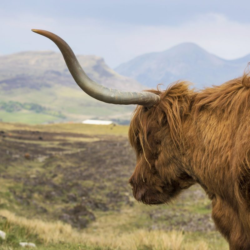Day trips to Skye from Inverness