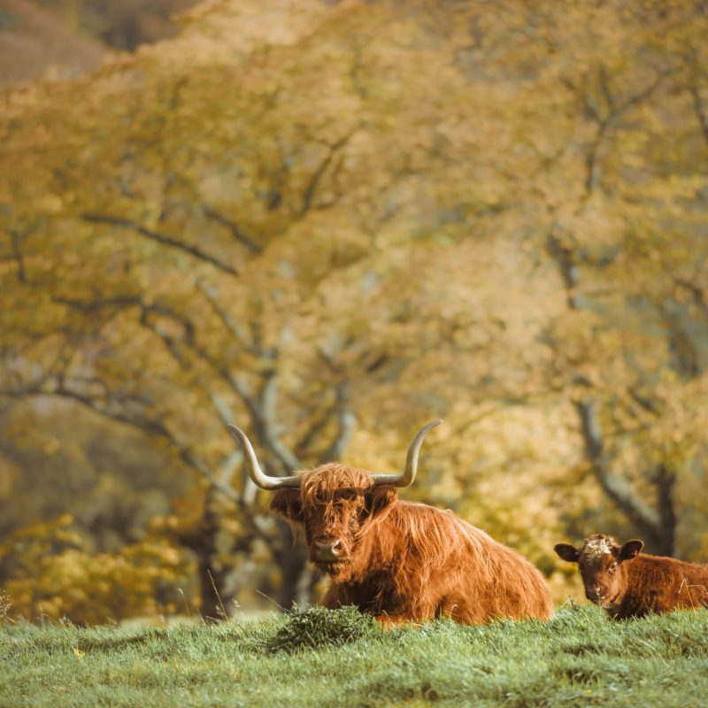 About us - Scottish Guided Tours